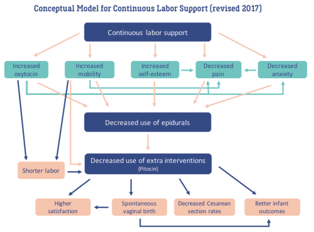 Conceptual Model Doulas (revised 2017)